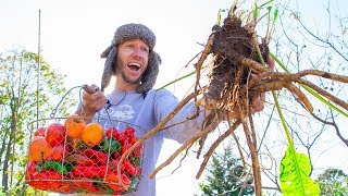 EPIC November Garden Harvest, Backyard Food Forest Gardening