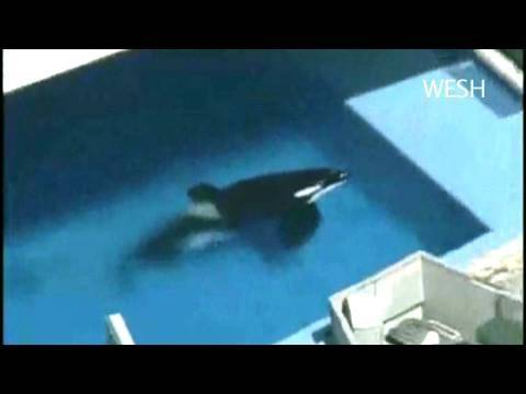 Jean-Michel Cousteau's Statement on Captive Orcas & the Trainer Killed at Sea World