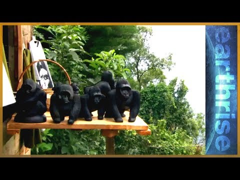 earthrise -Mountain Gorillas In Uganda & The Great Seed Bank