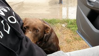 Friendly Stray Dog Waits Every Day In The Same Place For Someone To Save Him