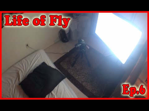 My First Porno - Life Of Fly Ep. 6 Pt. 2 video