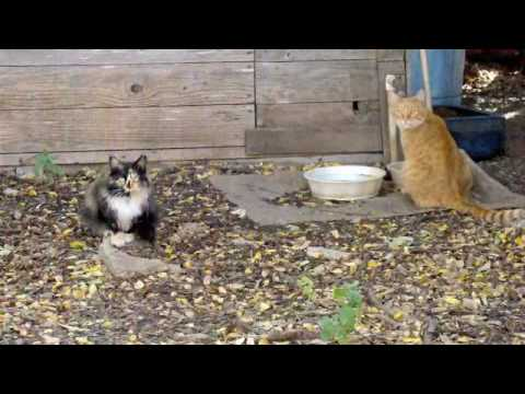How to catch a feral cat uk