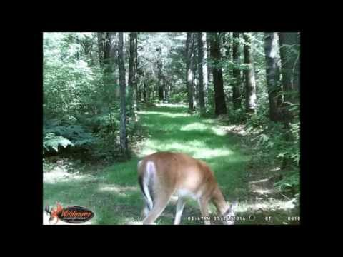 Small back wood food plots for deer 2014