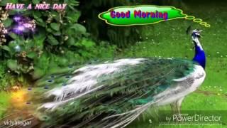 Ho Munda Songs HD||Jhipir Jhipir Shraban riyah Gamare