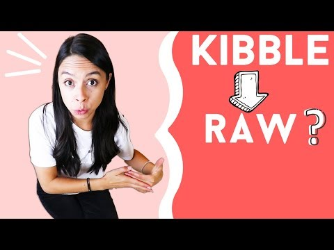 Best Way to Make the Switch // Kibble 👉 Raw Dog Food!! thumbnail
