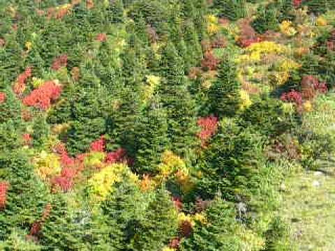 山頂線『フニテル』からの紅葉
