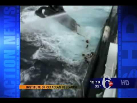 Whaling Boat rams Bob Barker's Boat, 6abc Action News