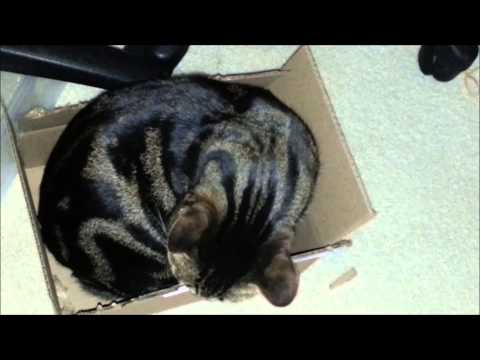 Matilda Esmeralda the Bengal Cat Who Likes to Eat Corrugated Boxes