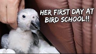 BIRD SCHOOL FOR MY BABY PARROT!   Vlog #224