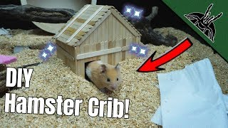 He got NEW HOUSE with a POOL! - DIY Hamster House