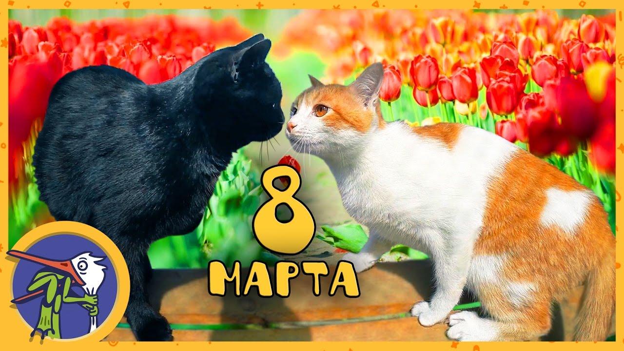 Кошки с поздравлением