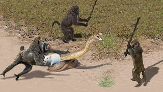 OMG! Capuchin Monkey Save Mouse From Banded Krait Snake Hunt | Amazing Python vs Big Cat