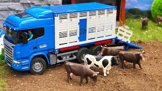 BRUDER truck COWs transport! Bruder toys 2018 NEWS | Kids video