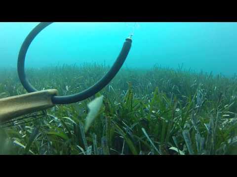 Rd32ii sualtı deneme rd32ii test diver spearfishing zıpkın avı