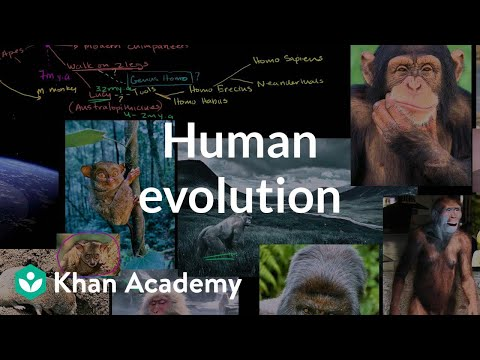 Human Evolution Overview