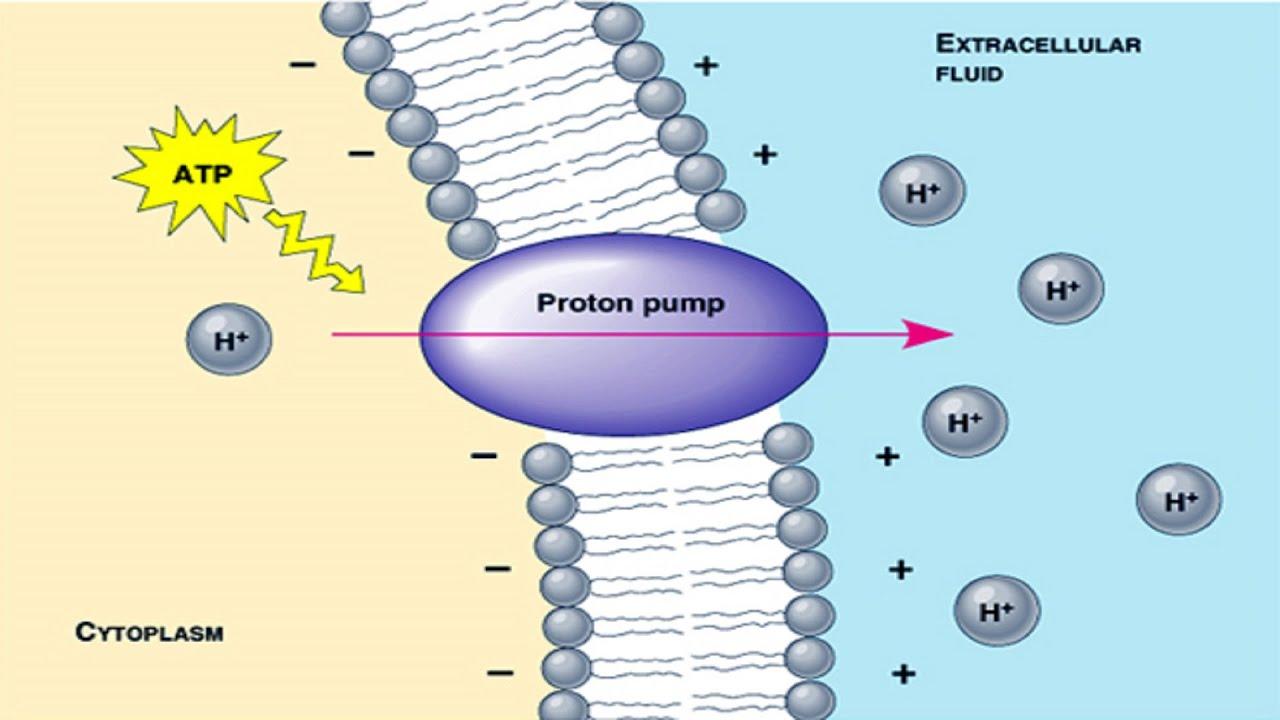 Proton Pump Structure Proton Pump