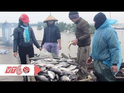 Giọt nước mắt của người nuôi cá vược | VTC
