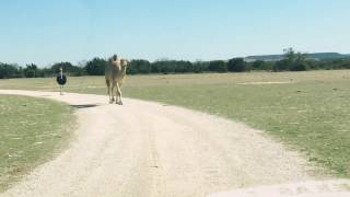 CAMEL vs. SUV
