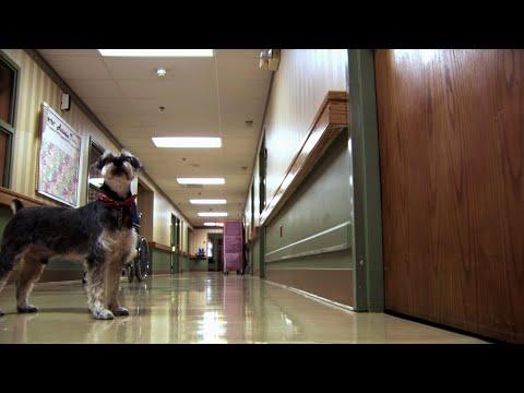 Dog of Death - Extraordinary Animals - Earth
