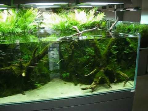 ADA Aqua Design Amano Nature Aquarium Gallery ????ADA ...