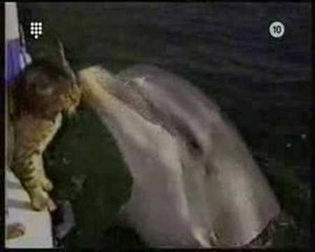 Cat versus Dolphin Video