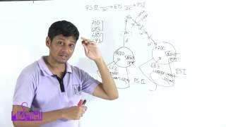 05.02. সালোকসংশ্লেষণ আলোক পর্যায়আলোক পর্যায় OR ফটোফসফোরাইলেশন পর্ব ০১ | OnnoRokom Pathshala