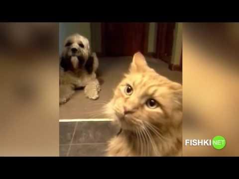 Кот в доме хозяин!