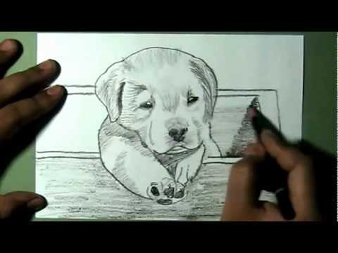 How To Draw A Baby Dog And Cat