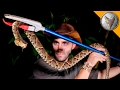 KILLER Snake of Central America! MP3