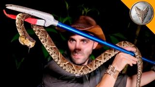 KILLER Snake of Central America!