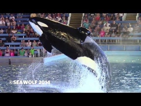 SeaWorld San Antonio - One Ocean - 04.11.2014