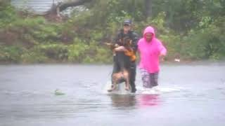Reporter Julie Wilson helps rescue dog from flooded New Bern