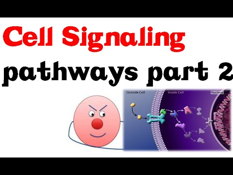 Cell Signaling Pathways part 2