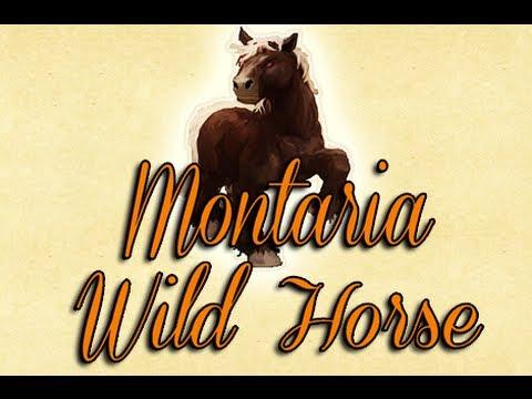 Tutorial Como fazer um Sugar Oat e domar o Wild Horse