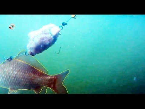 донка подводная съемка