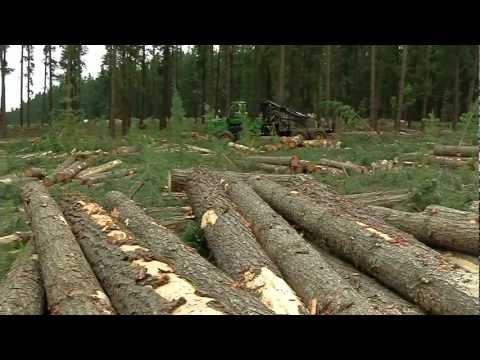 South Australia's pine tree experts