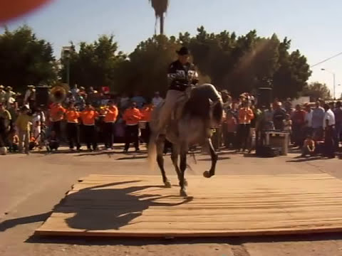 Caballo moro de baile, Fiestas de Michoacan Octubre, 2008.