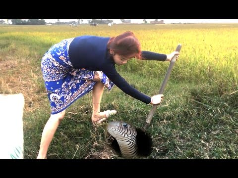 Amazing Girl Catch Biggest Snake In The Hole By Digging | How To Dig & Catch Big Snake In Cambodia