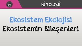 Ekosistem Ekolojisi  Ekosistemin Bile Enleri