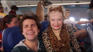 THERE WAS A LLAMA ON MY FLIGHT!!   David Dobrik