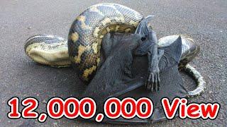 5 อันดับ งูจอมตะกละที่ต้องมาตายเพราะกินไม่เลือก