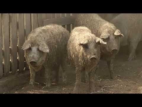 Hajdúnánási Televízió: Aktuális állatorvosi hírek 2017.09.08.