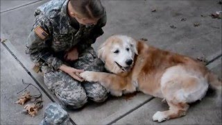 Soldier Coming Home; Dog's Reaction