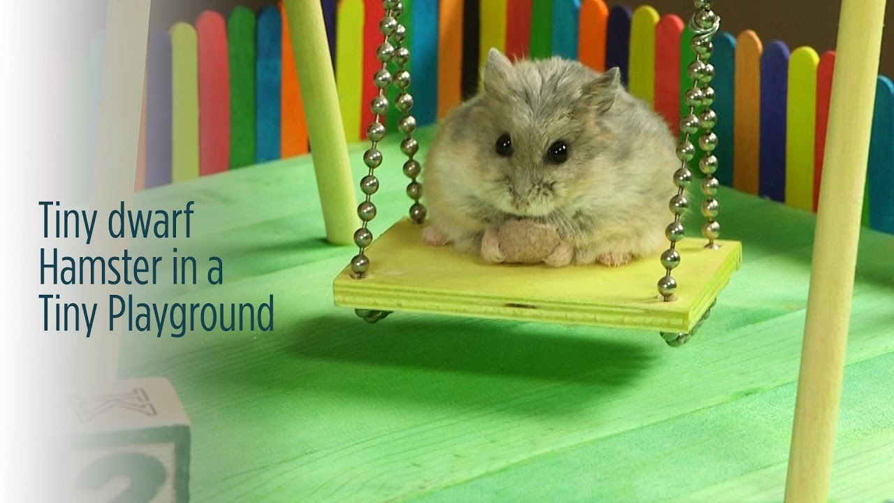 Can Hamsters Eat Budgie Food