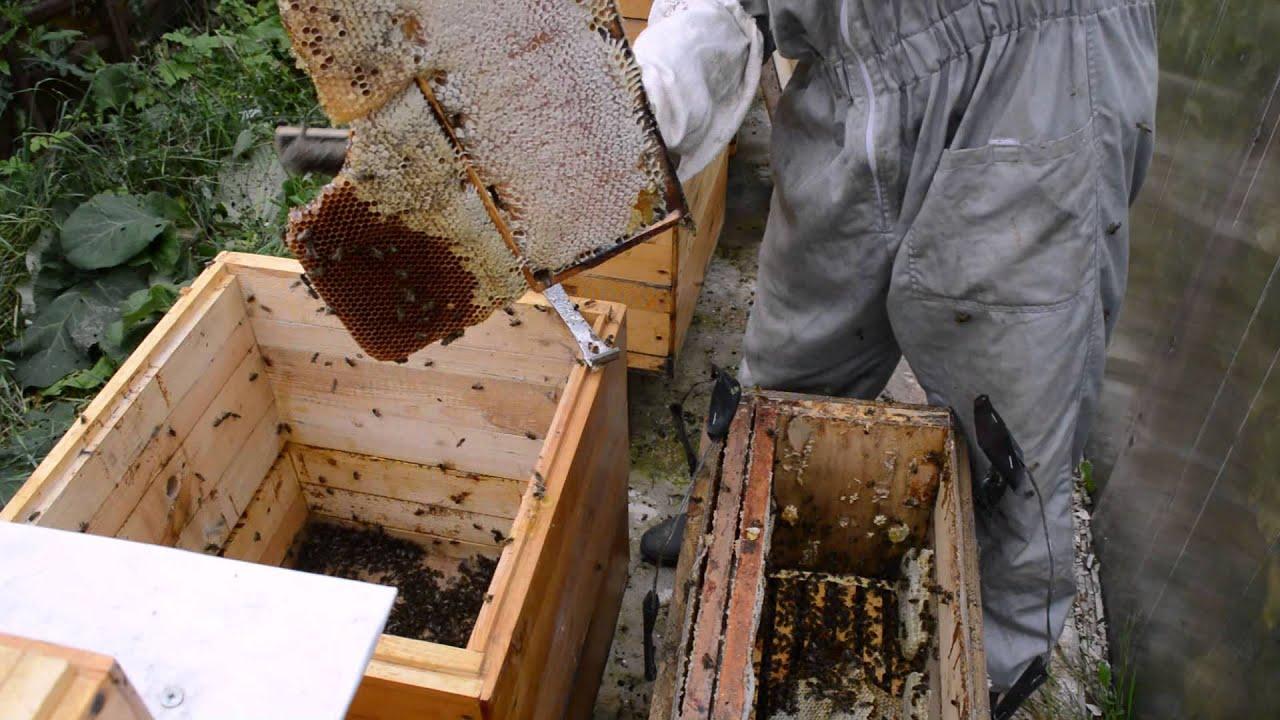 Как сажать пчел в новый улей 26