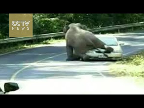 Elephants on a rampage at Thailand park