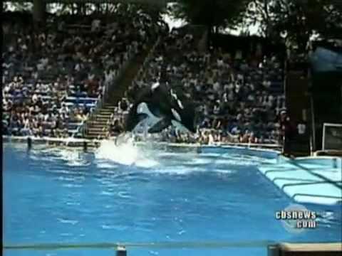 Whale Kills Trainer at Sea World