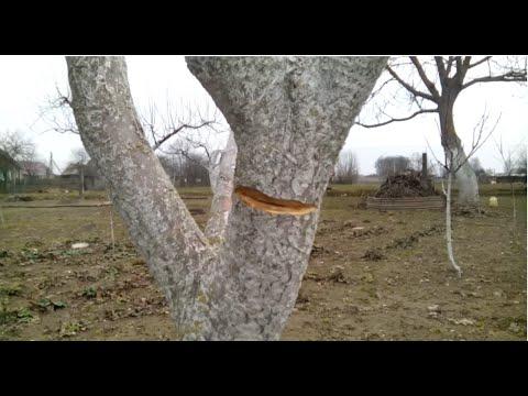 Кербовка своими руками – или как исправить однобокое дерево