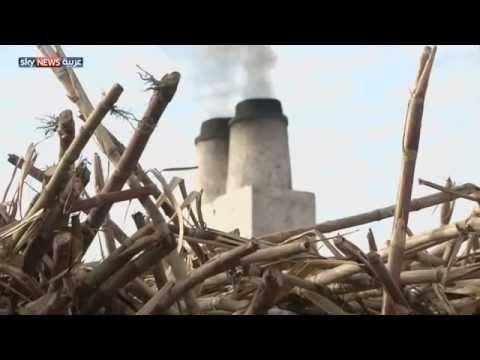 مصر.. العسل الأسود صناعة بلا دعم