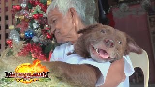 Matanglawin: Lola's best dog